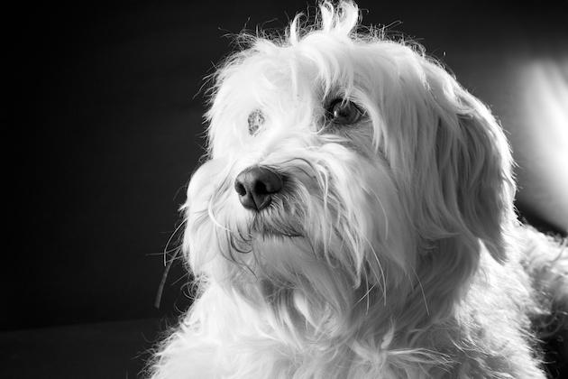 Snoopy de dag na het asiel