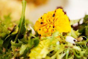 Betty's amsterdam - vegetarisch restaurant - eetbare bloemen