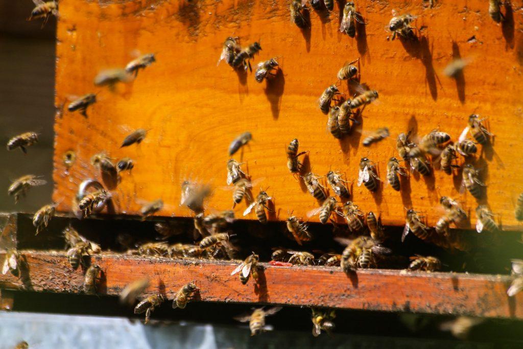 bijenkorf honing