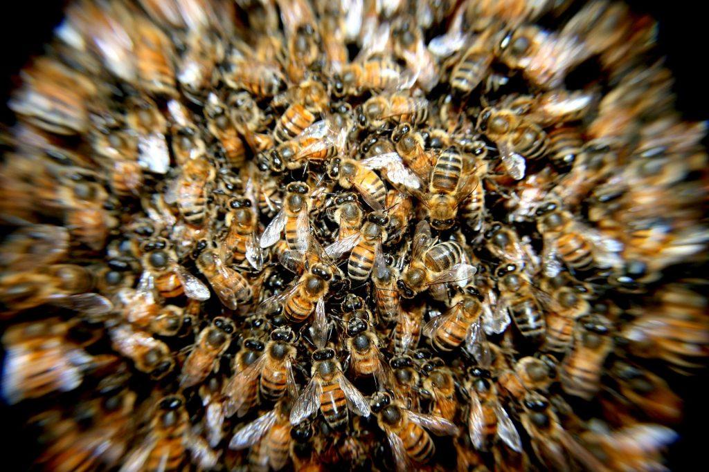 Bijenpopulatie
