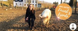 Forrest & Friends - animal sanctuary in Kaggevinne (Diest)