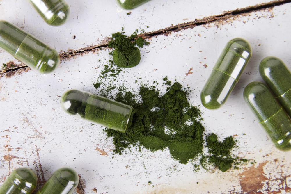 plnktn supplement - fytoplankton