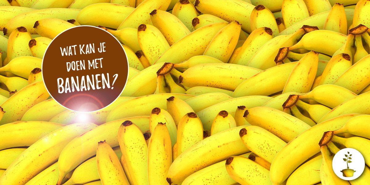 Wat kan je allemaal met bananen doen?